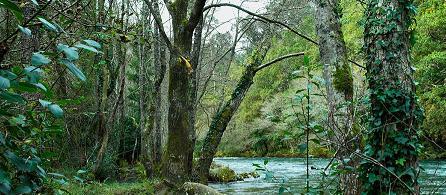 Protegamos los bosques de España
