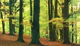 -Los bosques españoles son un patrimonio muy valioso