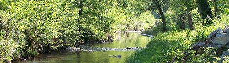 -vegetación de ribera fluvial.