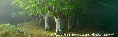 -Fotografia cortesia de: http://forestman.espacioblog.com/